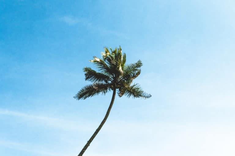 Reisezeit Sri Lanka