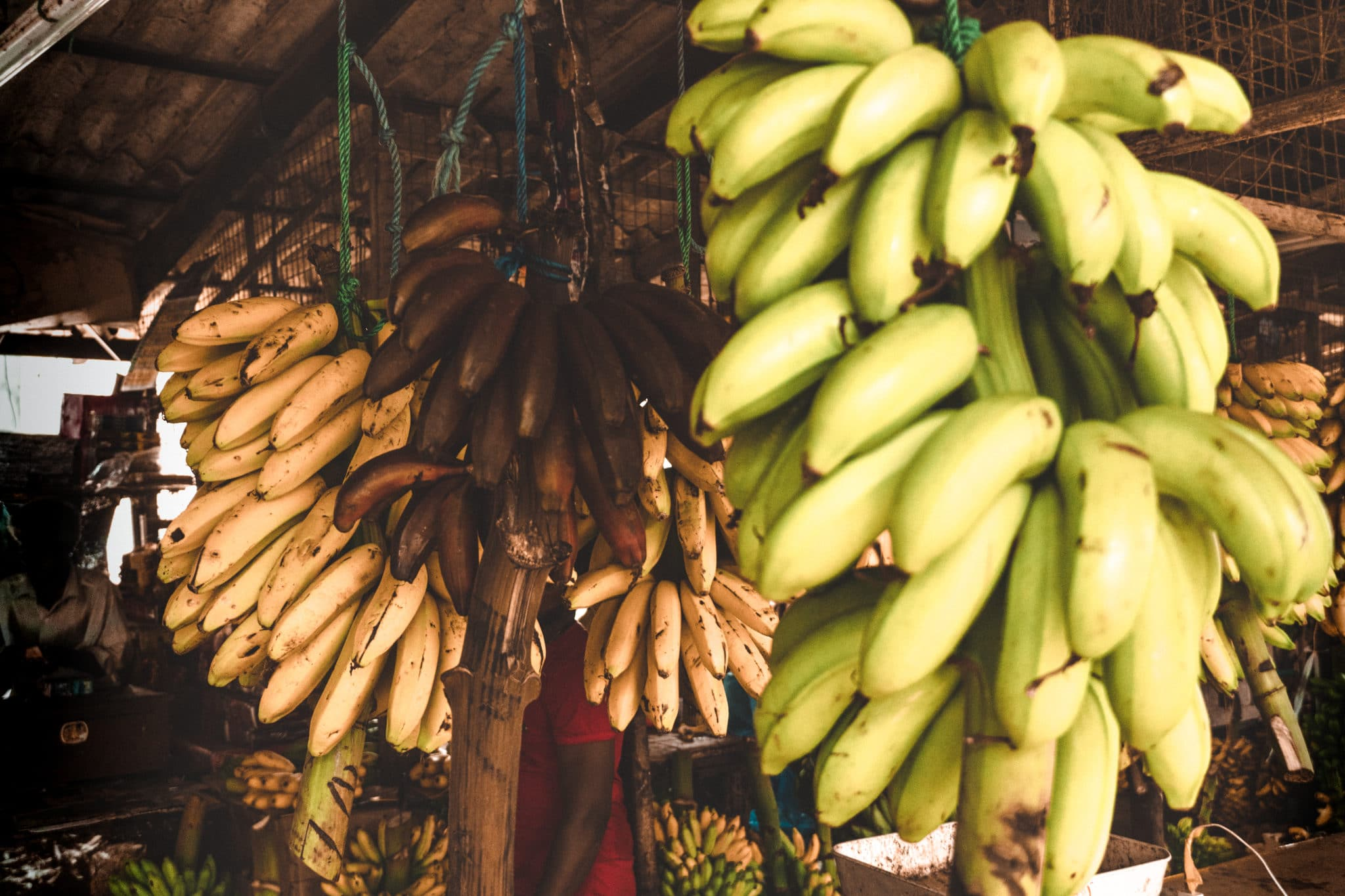 Bananen in Sri Lanka