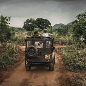 Sri Lanka Reiseführer - Safari