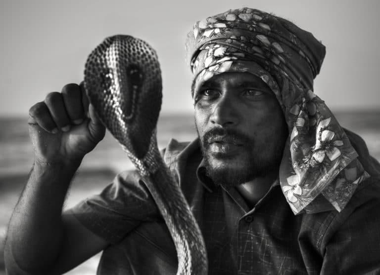 Cobra Sri Lanka